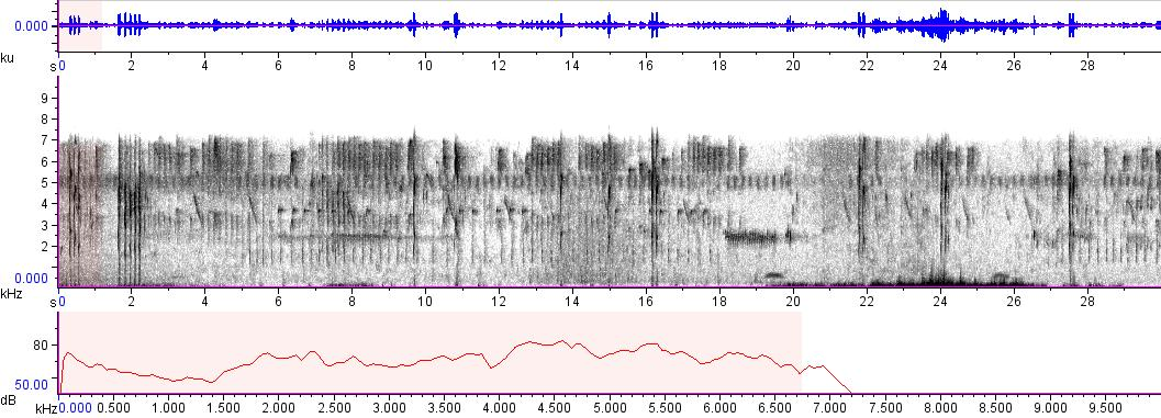 Sonogram of recording #AV 8933