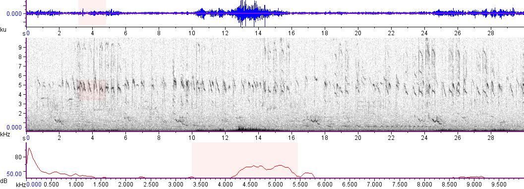 Sonogram of recording #AV 8938