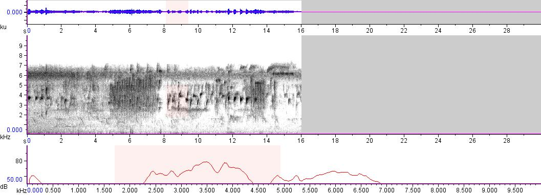 Sonogram of recording #AV 8939