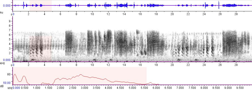Sonogram of recording #AV 8944