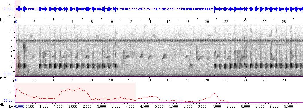 Sonogram of recording #AV 8945