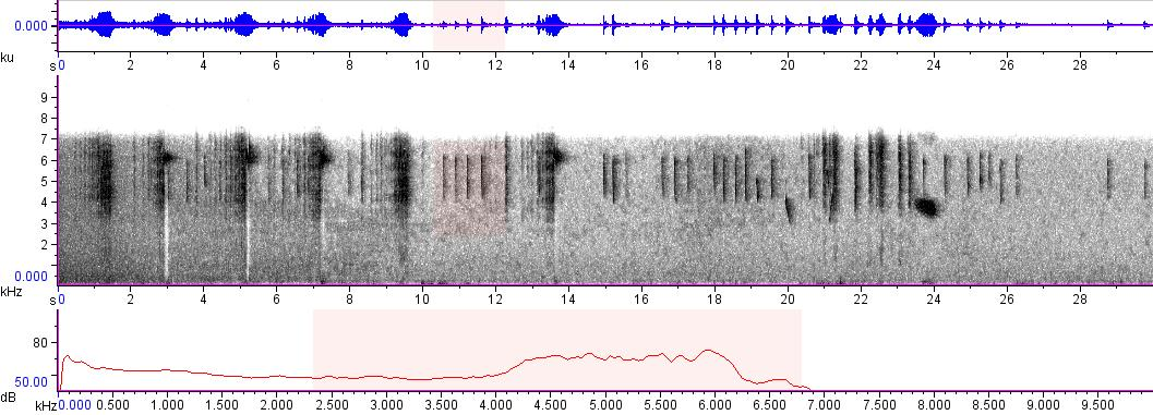 Sonogram of recording #AV 8954
