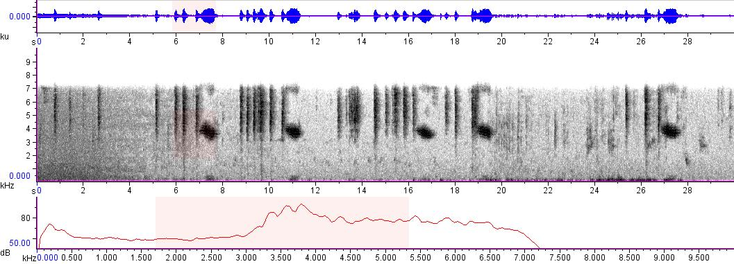 Sonogram of recording #AV 8955