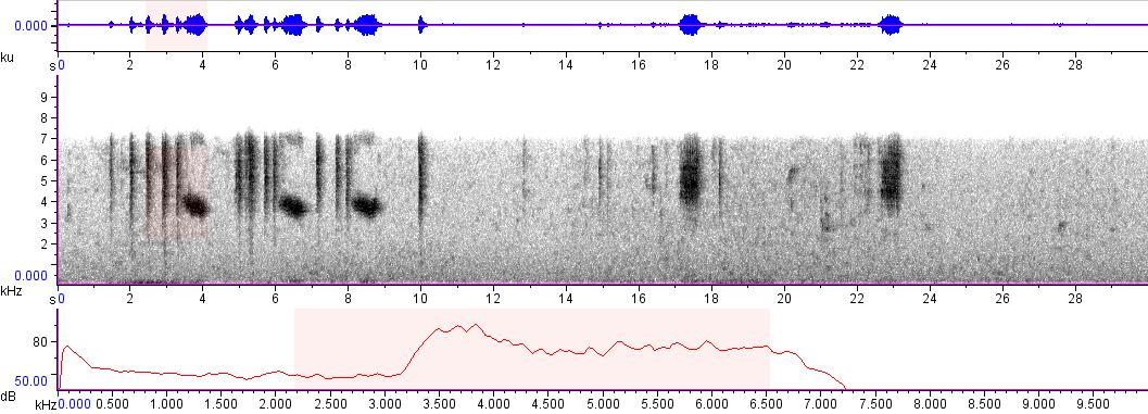 Sonogram of recording #AV 8956