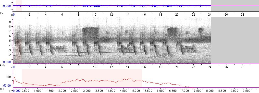 Sonogram of recording #AV 8960