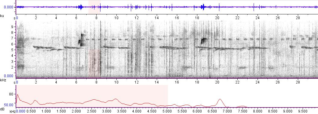 Sonogram of recording #AV 8961