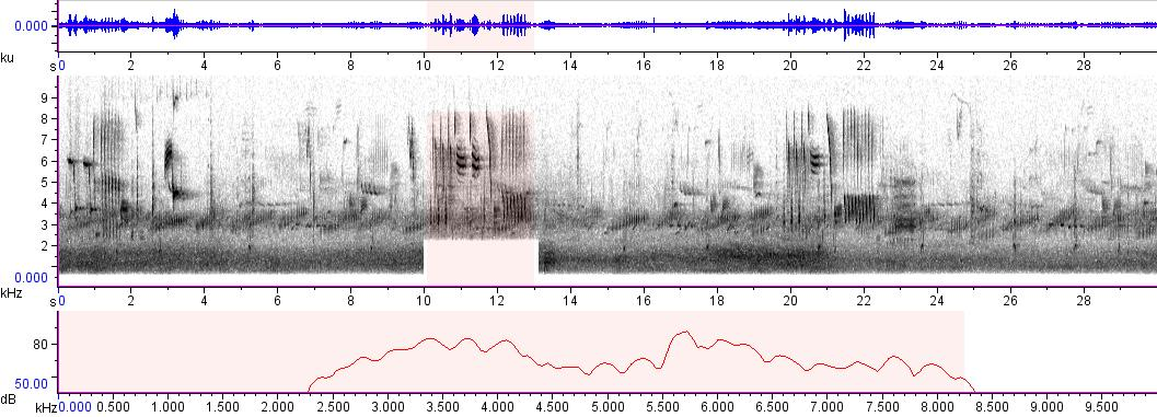 Sonogram of recording #AV 907