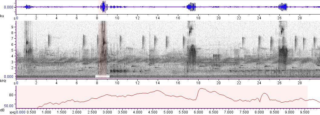 Sonogram of recording #AV 911