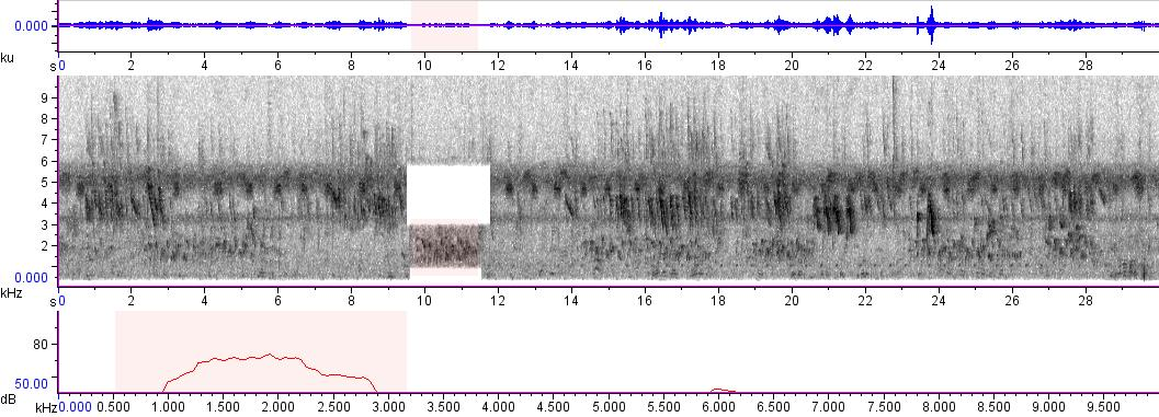 Sonogram of recording #AV 965