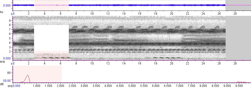 Sonogram of recording #AV 991