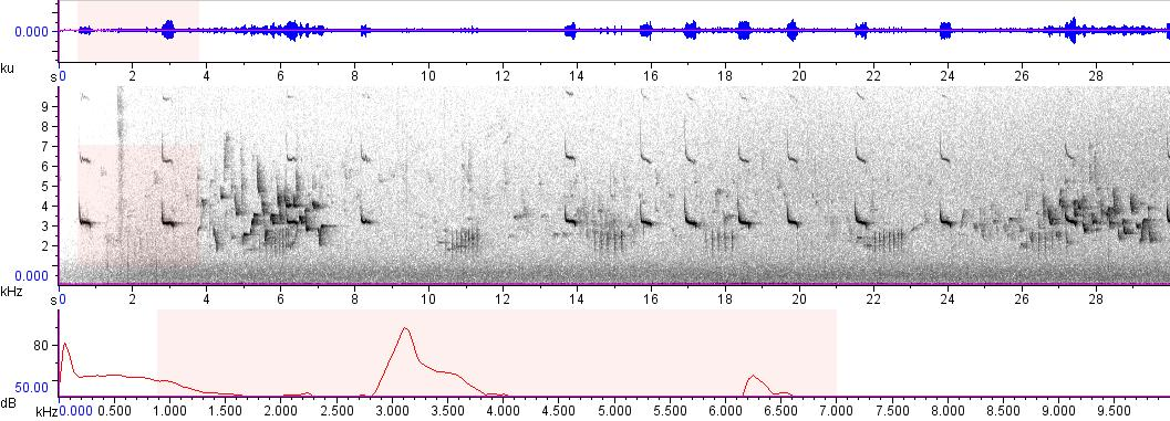Sonogram of recording #AV 9005