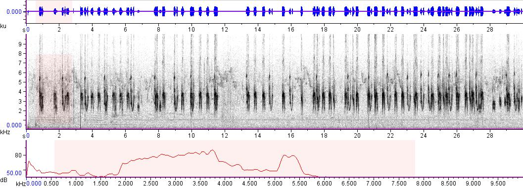 Sonogram of recording #AV 9016