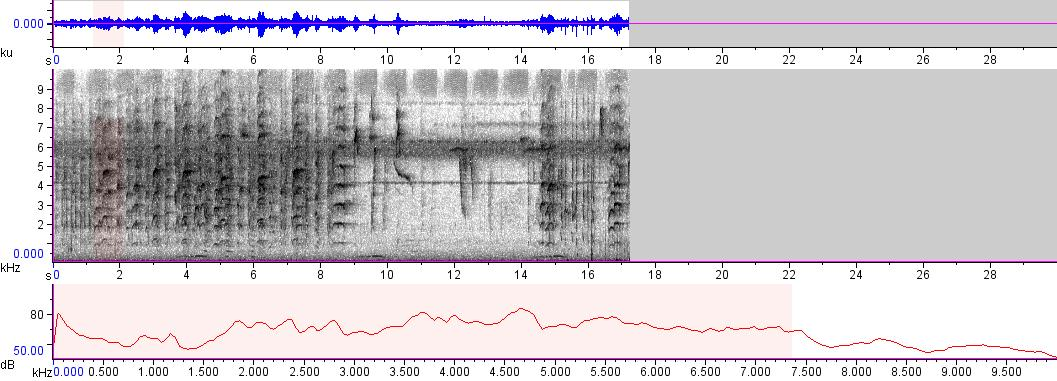 Sonogram of recording #AV 9021