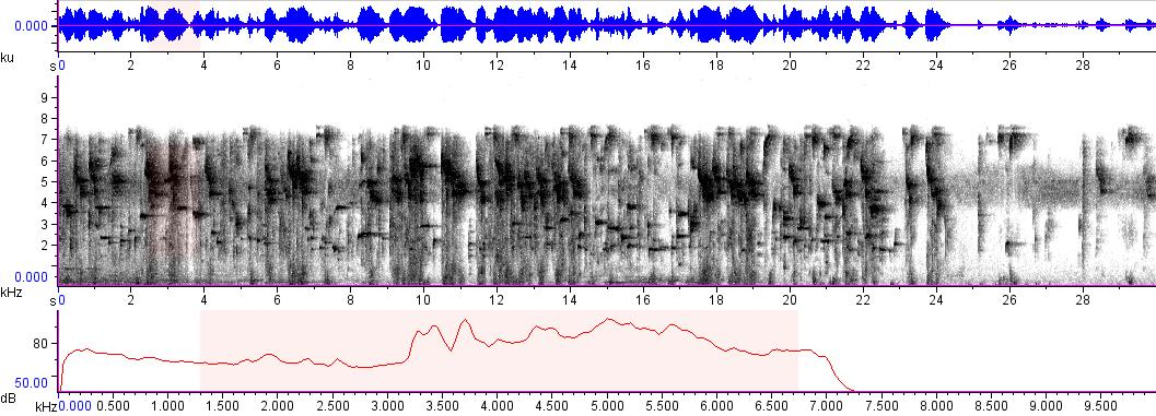 Sonogram of recording #AV 9039