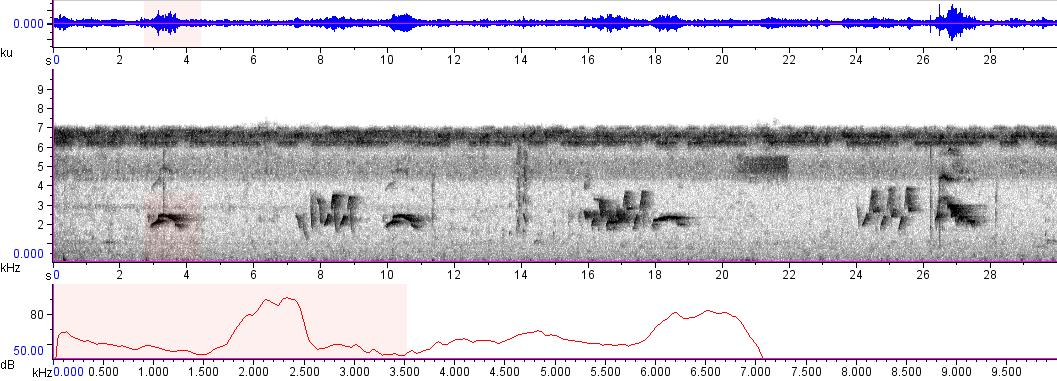 Sonogram of recording #AV 9046