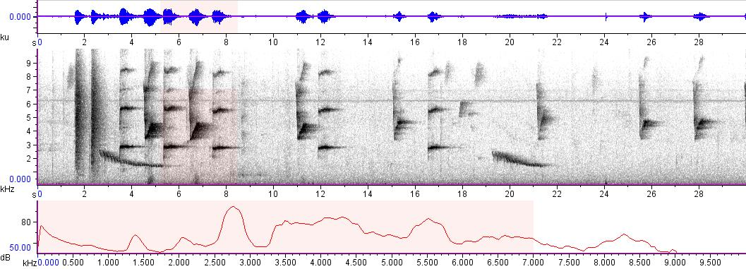 Sonogram of recording #AV 9053