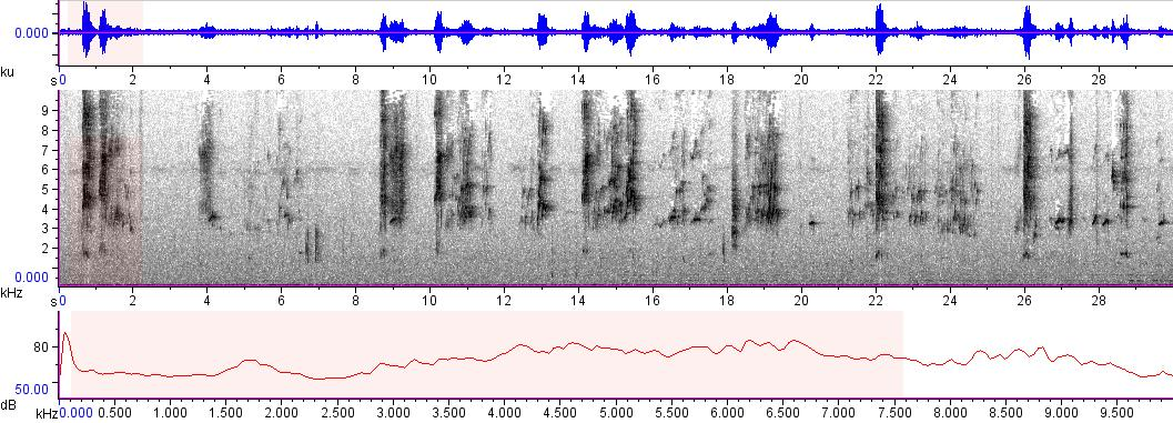 Sonogram of recording #AV 9061