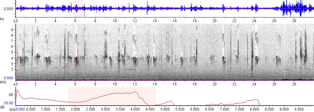 Sonogram of recording #AV 9062