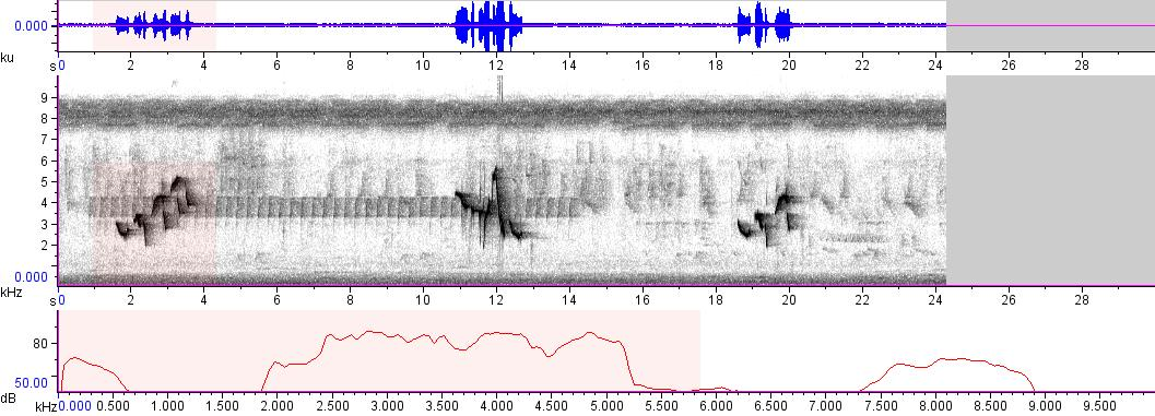 Sonogram of recording #AV 9086