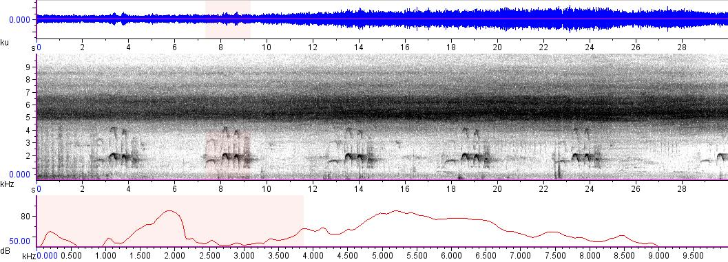 Sonogram of recording #AV 9094