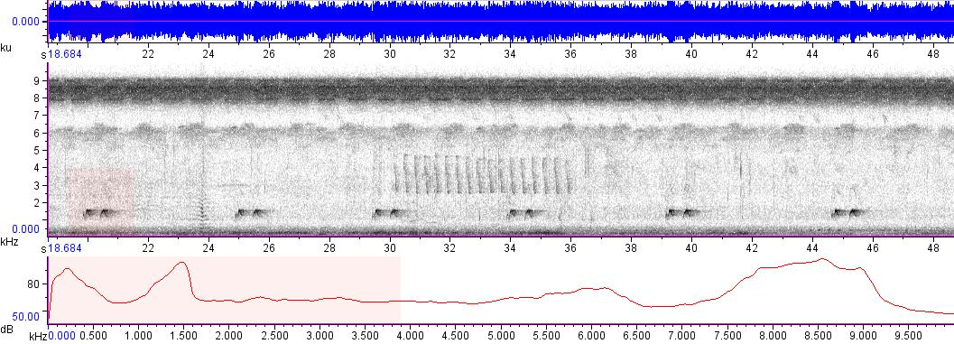 Sonogram of recording #AV 9095