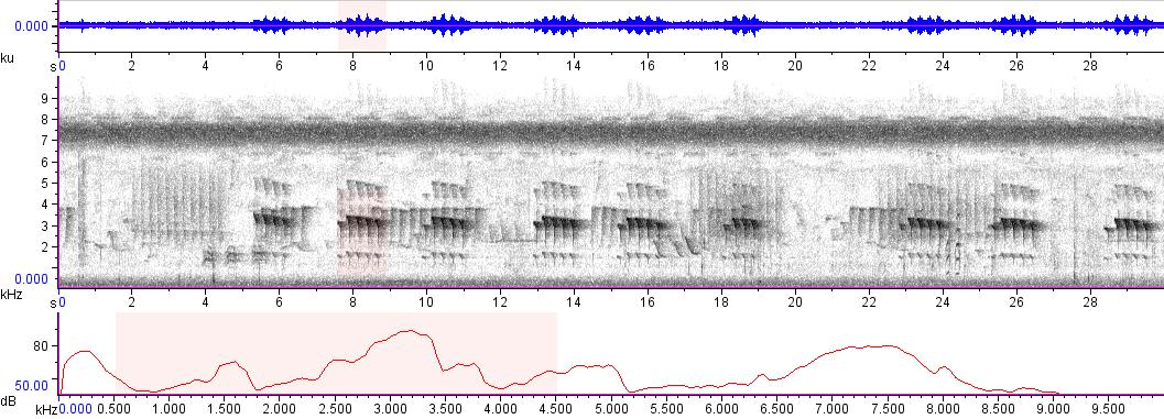 Sonogram of recording #AV 9097