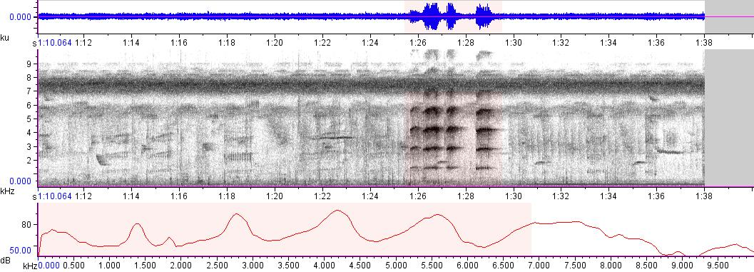 Sonogram of recording #AV 9099