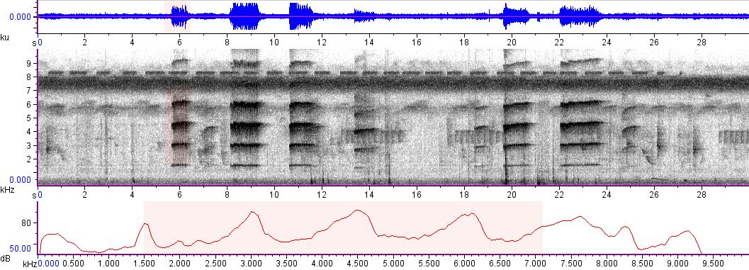 Sonogram of recording #AV 9100