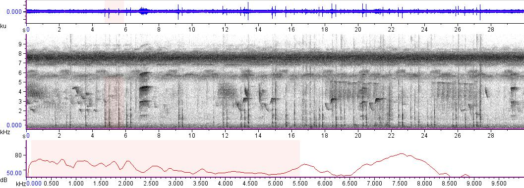 Sonogram of recording #AV 9101