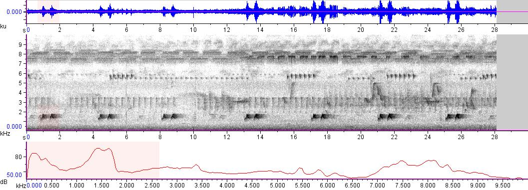 Sonogram of recording #AV 9108