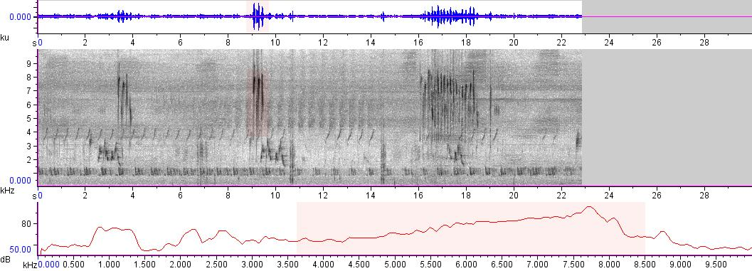 Sonogram of recording #AV 9113