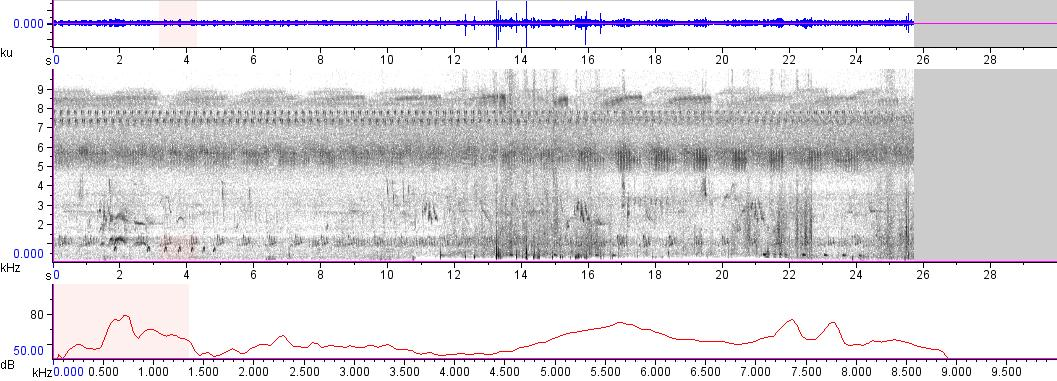 Sonogram of recording #AV 9117