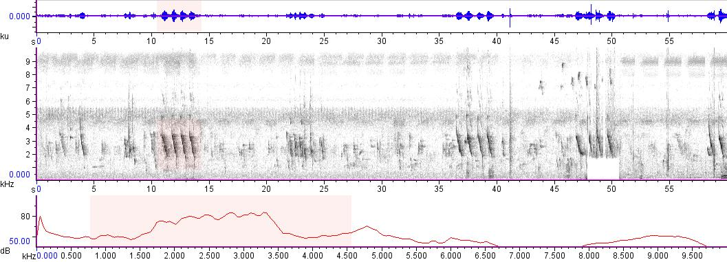 Sonogram of recording #AV 9142