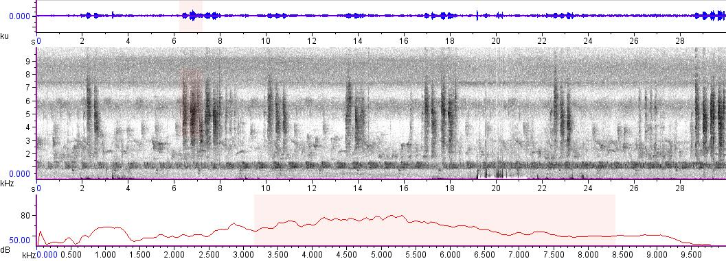Sonogram of recording #AV 9150