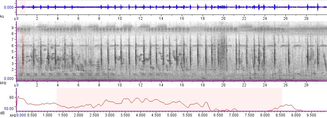 Sonogram of Passer montanus
