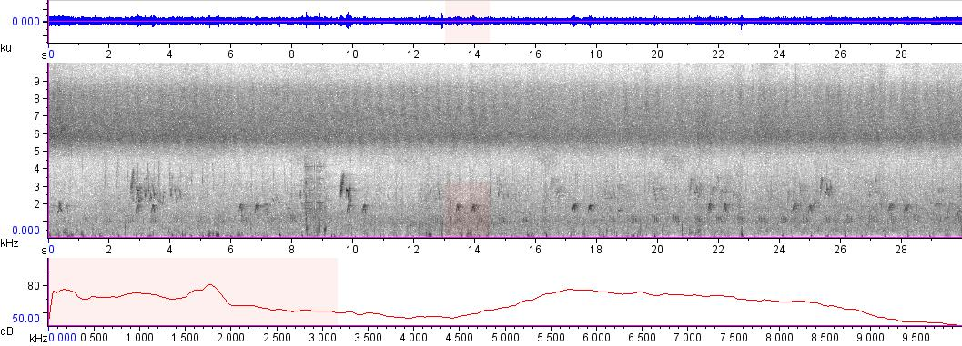 Sonogram of recording #AV 9174