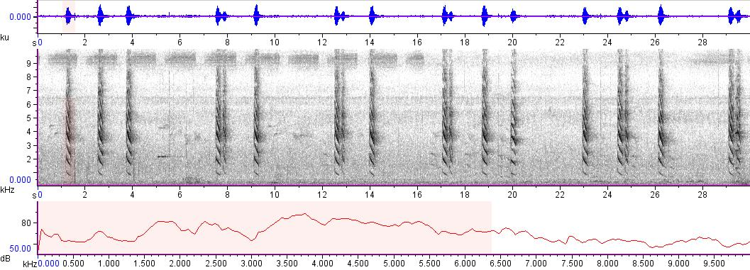 Sonogram of recording #AV 9177