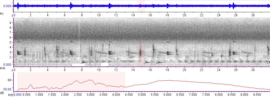 Sonogram of recording #AV 9182