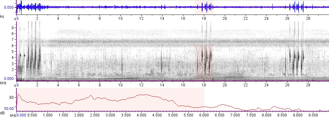 Sonogram of recording #AV 9339