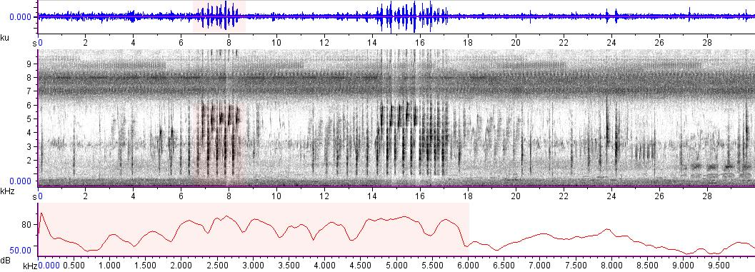 Sonogram of recording #AV 9340