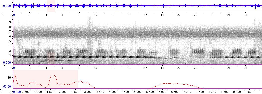 Sonogram of recording #AV 9355