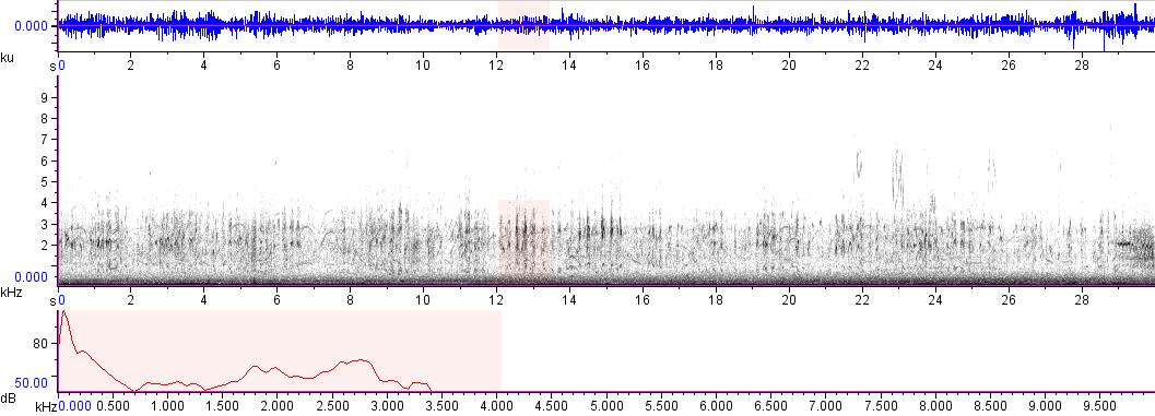 Sonogram of recording #AV 9358