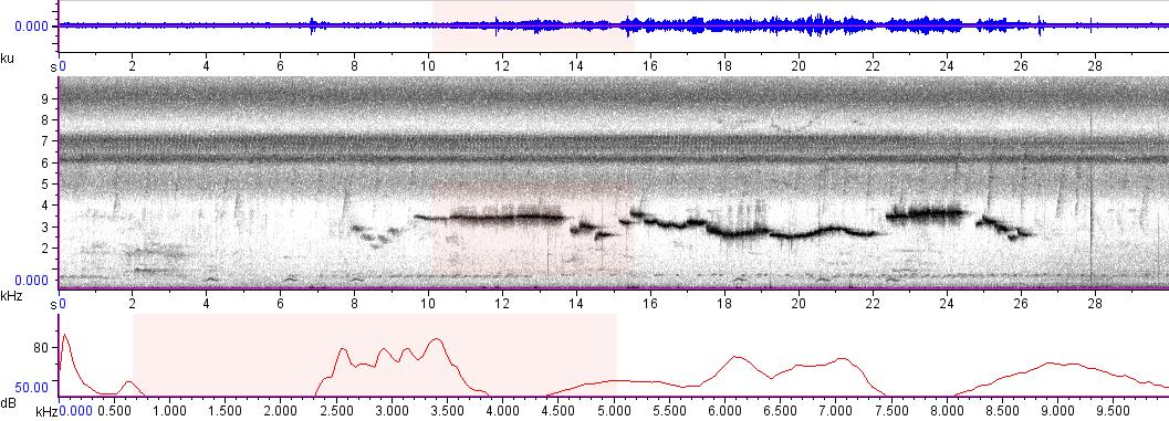 Sonogram of recording #AV 9404