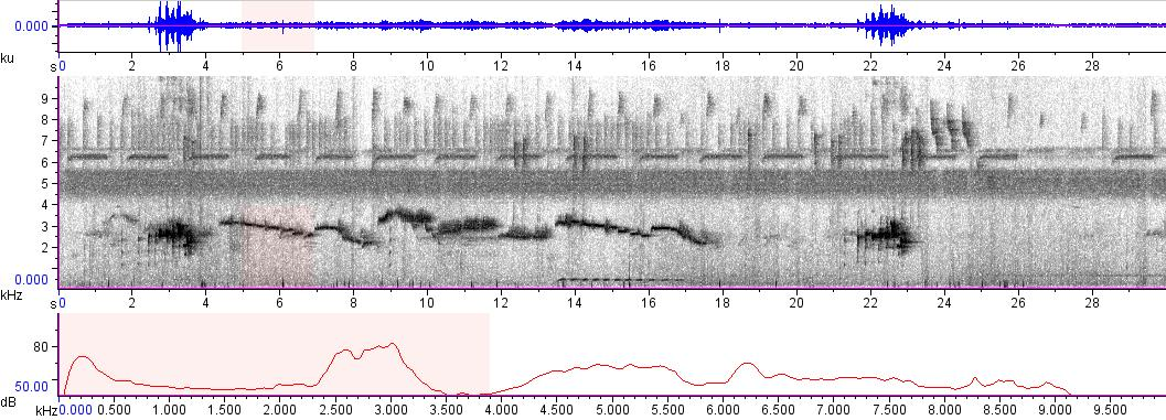 Sonogram of recording #AV 9405