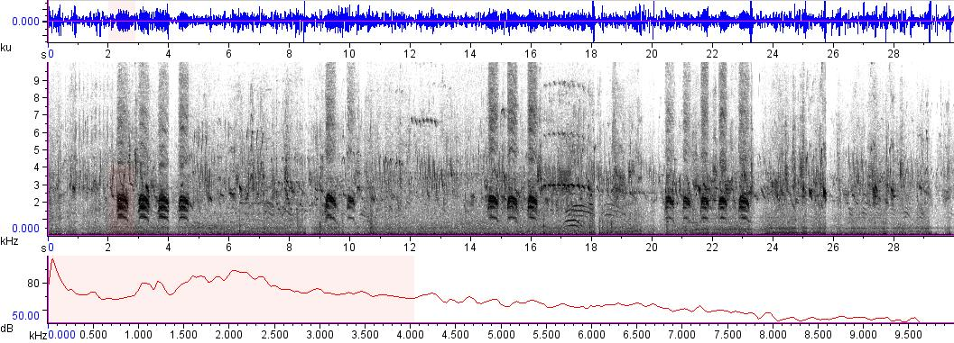 Sonogram of recording #AV 9420