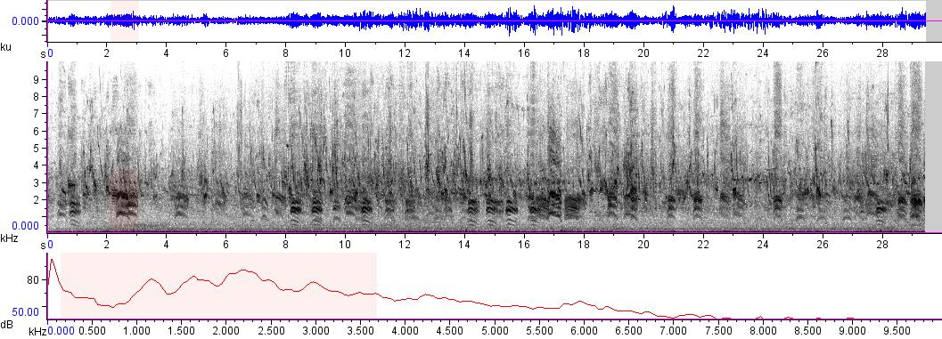 Sonogram of recording #AV 9422