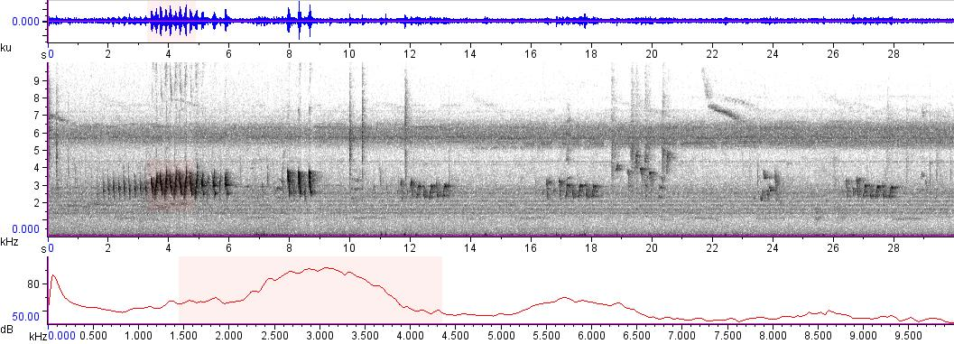 Sonogram of recording #AV 9437