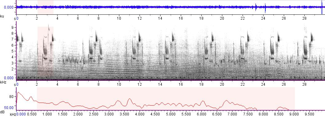 Sonogram of recording #AV 9442