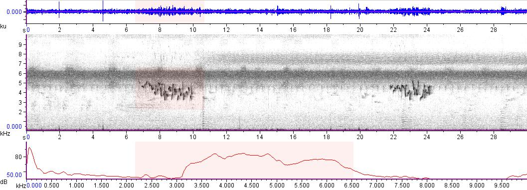Sonogram of recording #AV 9451