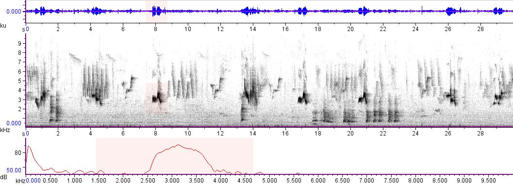 Sonogram of recording #AV 9457